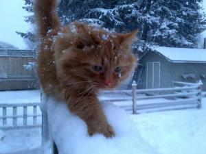 stew snow